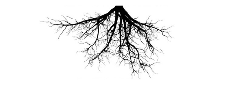 unoaked top roots only